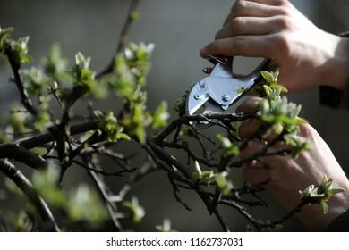Gartenarbeit zum Frühling oder Herbst mit Händen und Werkzeugen