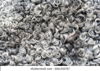Gary wool texture background, cotton wool, grey fleece, dark fluffy fur, curly hair.
