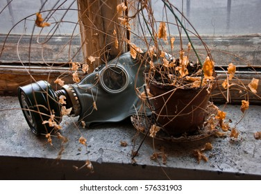 Gas mask and dried flowers in abandoned factory