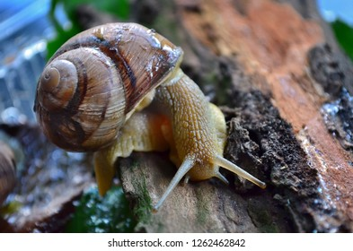 gastropod images stock photos vectors shutterstock