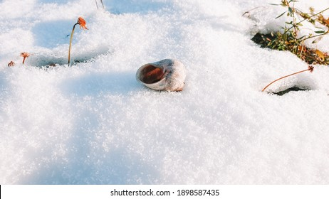 The gastropod shell lies on the snow under the rays of the sun. The snail's house lies in the snow in winter.