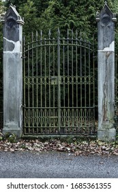 A gate to dark forest. Iron gate between two old dirty columns.