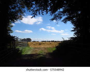 Gate and hay field, Ireland