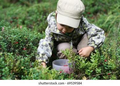 Gathering berries