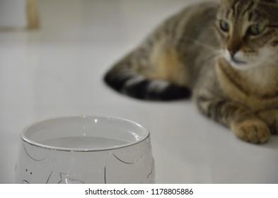 Gato bebendo água