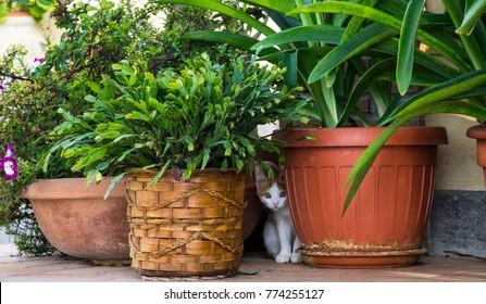 Gatti in libertà