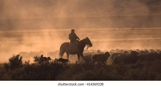 Gaucho with a herd of sheep in Patagonia