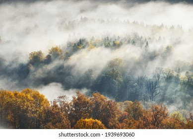 Gauja river valley and golden forest in a clouds of thick mysterious morning fog at sunrise. Sigulda, Latvia. Breathtaking panoramic aerial view. Pure nature, environmental conservation, ecotourism