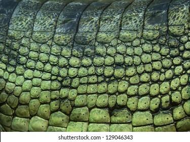 gavial skin