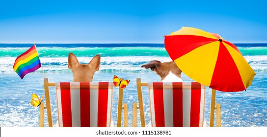 gay couple of dogs resting and relaxing on a hammock or beach chair under umbrella at the beach ocean shore, on summer vacation holidays