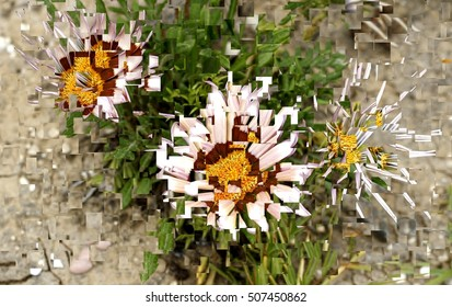 gazania splendens, impressionist photography, artistic composition of flowers, spring, background, flowers, flower, nature, floral, garden, summer, beautiful, landscape, pink, blossom, white, tree,