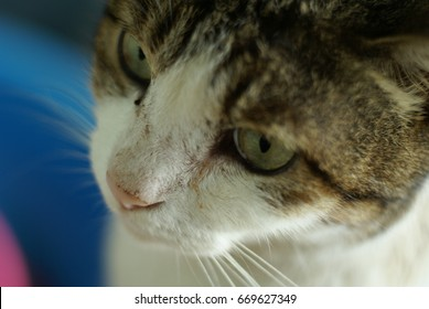 gaze cute cat