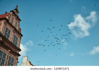 Gdansk, Poland. Flying pigeons in the sky.