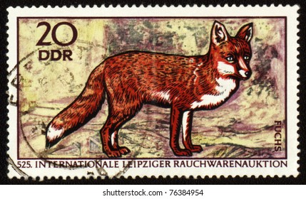 GDR - CIRCA 1970: post stamp printed in GDR (East Germany) shows red fox, series Wild animals, circa 1970
