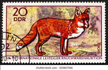 GDR - CIRCA 1970: a stamp printed in GDR shows Red Fox, Vulpes Vulpes, 525th International Fur Auctions, Leipzig, circa 1970