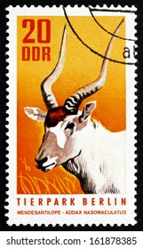 GDR - CIRCA 1970: a stamp printed in GDR shows White Antelope, Addax, Addax Nasomaculatus, Animal, circa 1970