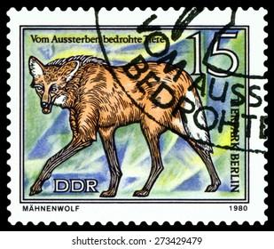 GDR - CIRCA 1980: A stamp printed in  GDR,  shows Prairie wolf, series  Tier park, Berlin, circa 1980