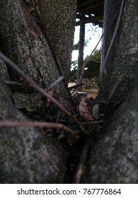 geb in the tree