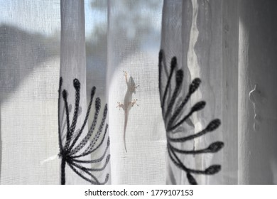 Gecko outline against white flowery curtain background