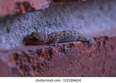 A gecko resting between the bricks at our house in Houston. Taken by our son age 5.