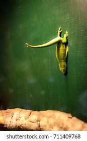 A gecko in the zoo is hanging on the wall