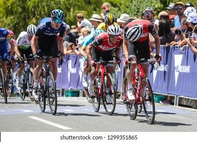 GEELONG, AUSTRALIA - JANUARY 27: TREK-SEGAFREDO (TFS) in the peloton ascend Challambra Crescent in the 2019 Cadel Evans Great Ocean Road Elite Mens Race