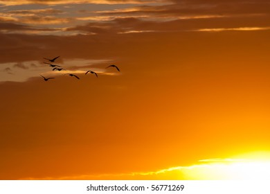 Geese in Flight on Brilliant Sky - Can be Used as Background
