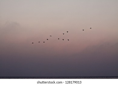 Geese flying in flock. Sunrise over the sea