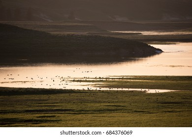 Geese on the shores of Yellowstone River during a summer sunset in Yellowstone National Park