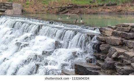 Geese play in Lee Creek as it spills acrtoss Lee Creek Dam, at Devil's Den State Park, in Arkansas.