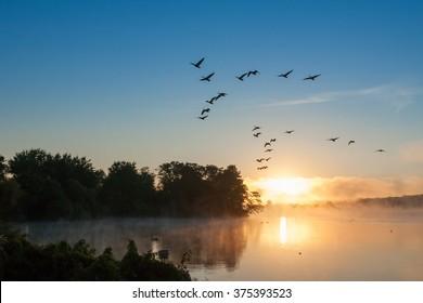 Geese taking off of lake