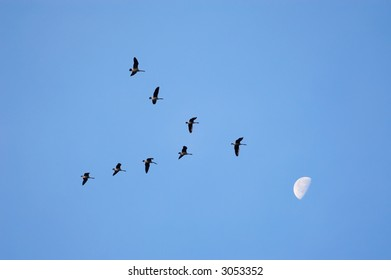Geese in v formation against the blue sky and moon, migrating