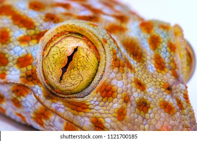 Gekkota Gekko Gecko Lizard Close up on the eye on a White Background