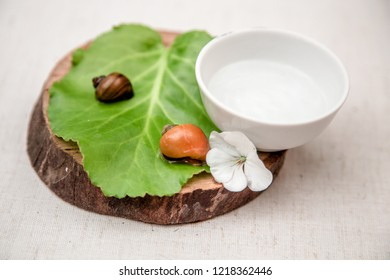 gel of snail mucus, mucin in a white jar, on a green leaf are snails, cosmetics from snail mucin
