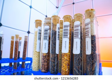 Gene banks plants.  Study of agricultural seeds in the lab