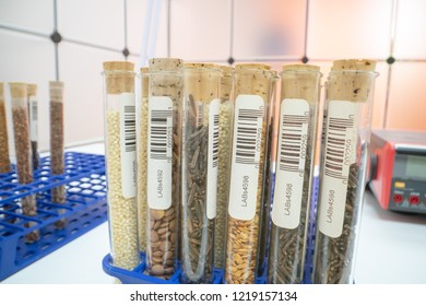 Gene banks plants.  Study of agricultural seeds in the lab. Design of the label is specially created for this shot and does not represent any information.