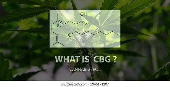 General cannabinoid - cannabigerol (CBG). Geranyl pyrophosphate and Olivetolic acid in marijuana buds