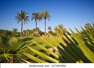 General de palmeras con cielo azul