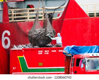 General Santos City, The Philippines - October 16, 2018: Frozen yellowfin tuna being loaded onto a truck from a feeder ship at the fishing port of General Santos City, Tuna Capital the Philippines.