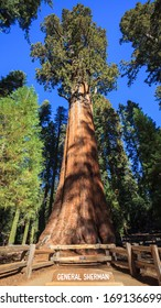 General Sherman - the largest tree on Earth, Sequoia National Park.