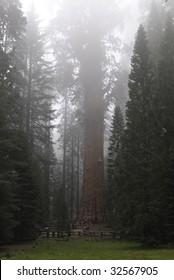 General Sherman Sequoia Tree in Sequoia National Park in California