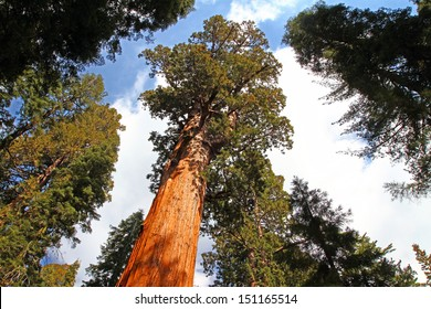 General Sherman tree in Sequoia National Park, California