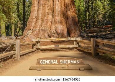 General Sherman Tree. Sequoia National Park. California. USA.
