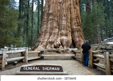 General Sherman Tree, world's largest living tree, in Sequoia National Park, California, USA (the base is 40 feet diameter)