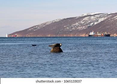 General view of Nagaev Bay, Magadan