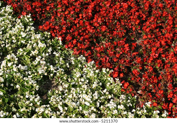 Generic different colors flowers in a background image