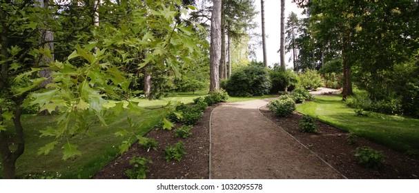 generic lush green summer english cottage back yard and garden