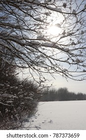 Generic Snow Scenes