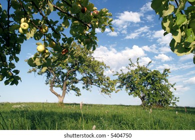 generous summer apple garden in august, countryside of Latvia, Europe