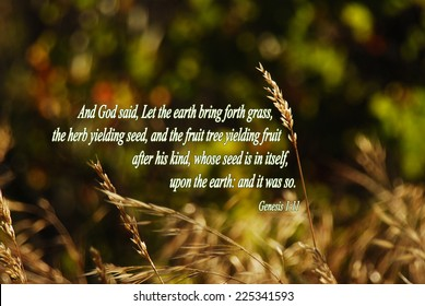 Genesis 111 And God Said Let The Earth Bring Forth Grass